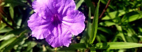 Blitz: Flourishing with Flowers (7-17-19)