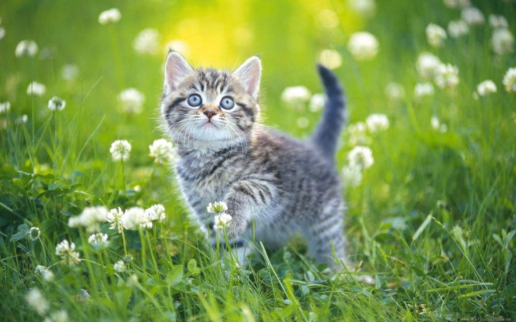 460235-cats-cat-in-flowers