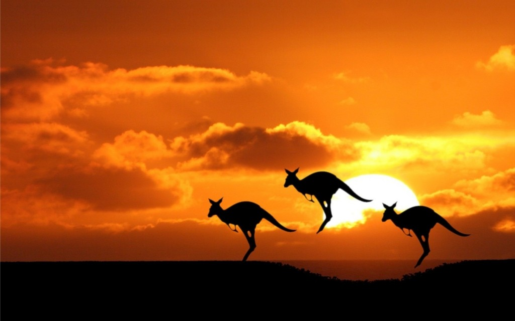 Kangaroo-at-Sunset