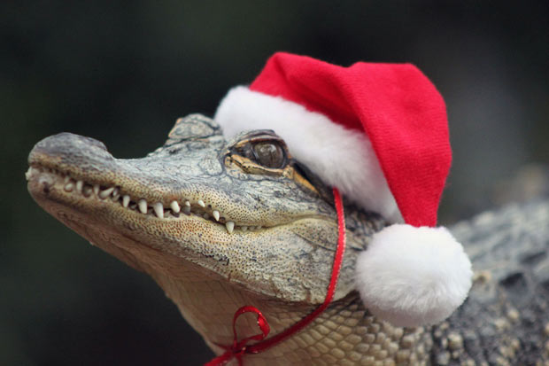 crocodile-santa-ha_1777343i