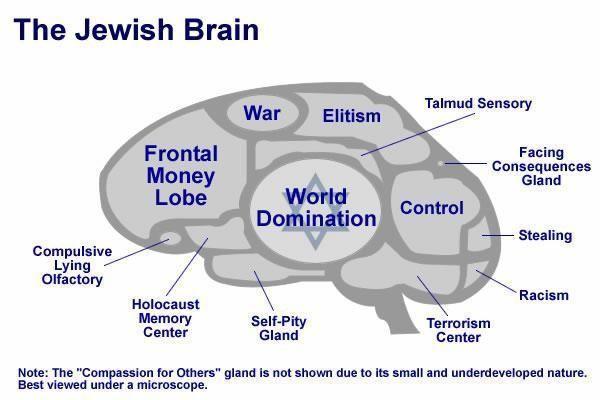 jewish-brain